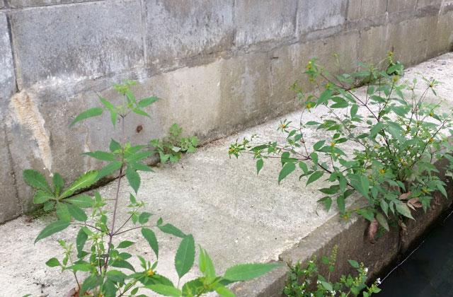 補修前のブロック